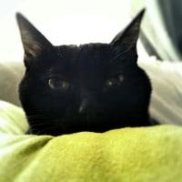 眠いのは猫だけじゃないよ(ΦωΦ)