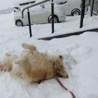 雪が降ってココ太郎元気に駆け回る♪