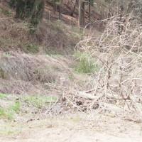 桑の木伐採