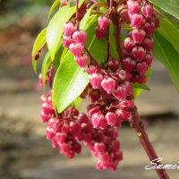 桜の蕾と庭の花