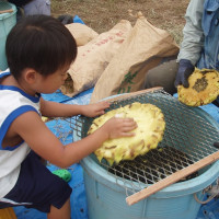 ひまわり種収穫体験イベント