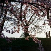 詩『春風のいたずら』