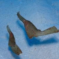 生物いろいろ。 沖縄ダイビング 那覇シーマリン