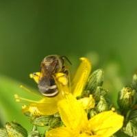 花粉でしょう