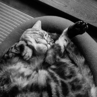 ライカM9〜高感度画質と猫とレンズ