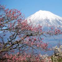 ☆富士山と春の花...♪