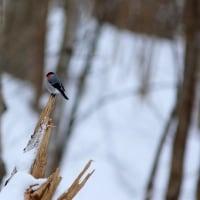 鳥撮り散歩