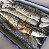 秋刀魚の棒受漁~大型船発動~今年もサンマを食べよう~