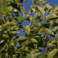 秋の「リンゴのタルト」が楽しみなMyリンゴの木を選ぶ。