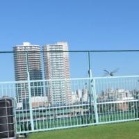 9月2日 青空とビルと芝生とギンヤンマ