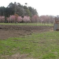 アライグマ対策で我が農園は研究者の最前基地です