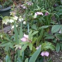 庭にも春の兆し🌼🌷