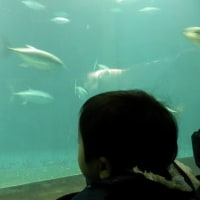 孫っちと行く水族館。
