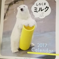 ミルクちゃんカレンダー買った!