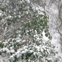 長崎は24日大雪