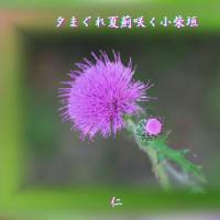 『 夕まぐれ夏薊咲く小柴垣 』つれづれ575qt2008