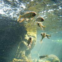 なかがわ水遊園から王国ハシゴ