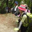 2017年7月22日 六甲仙人窟跡コースであじさいと巨石めぐり! 下りはバスで楽々