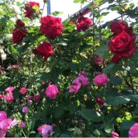 ログハウスは花盛り パート…
