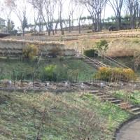 静かなダリア園