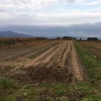 今年の大豆