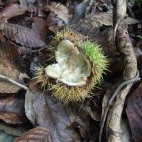木の実から見える動物の生態