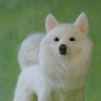 羊毛フェルト 白犬のハッピーちゃんのエピソード♪