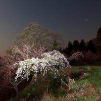 妙義山の桜夜景