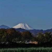 真っ白な富士山と五重塔