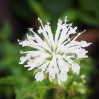 雨上がりの花壇