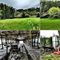 『谷戸川渓谷』 牛舎跡