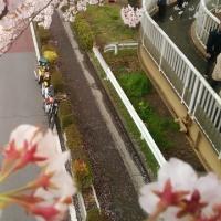 今年の桜めぐり
