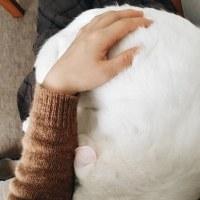 猫・ねこ・にゃんこちゃん〰💖