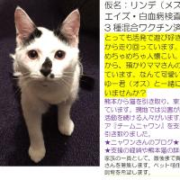 里親募集*熊本から来た仔猫たち*