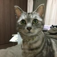 お詫び記事(^^;;;)