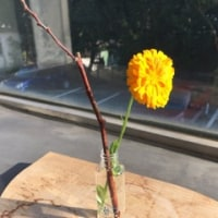 綺麗な花をありがとうございます。