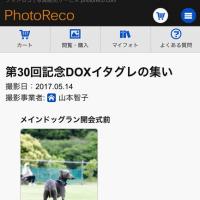 <イタグレの集い>の日の画像『フォトレコ』公開!