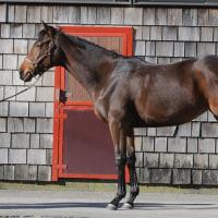 気になる1歳馬、ウェルシュステラ'15が美浦近郊に移動