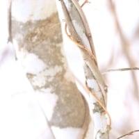 冬のモノトーン