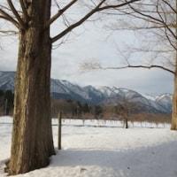 雪とメタセコイア