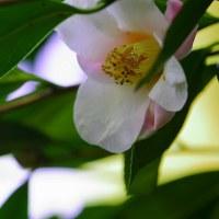 春色に~~