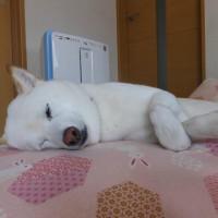 愛ちゃんの寝顔がいっぱい♪