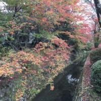 京都の秋 ~ 哲学の道