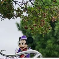 モチノキ 〈黐の木〉   東京ディズニーランド
