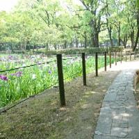 朝散歩は夜宮公園