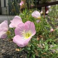 己を知る花