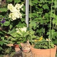 キジ猫の徳ちゃん植木鉢のそばでくつろぐ