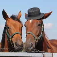帽子かぶった馬♪