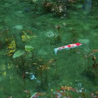 名もなき池(通称:モネの池)