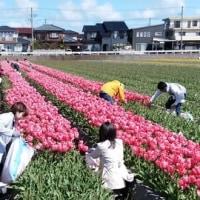 花摘み日和